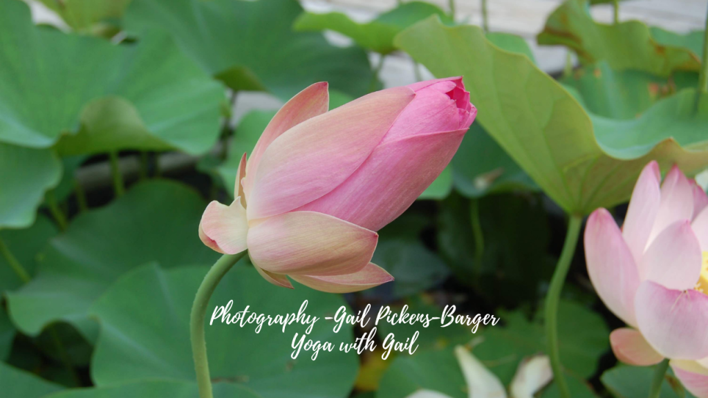 Meditation photography by Gail Pickens-Barger